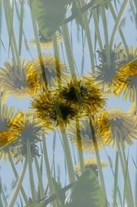 pollen10
