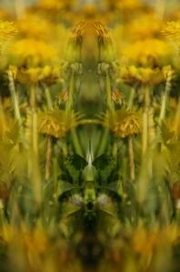 pollen7
